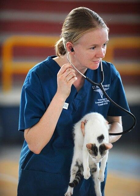 Katze wird von einer Ärztin medizinisch abgehorcht