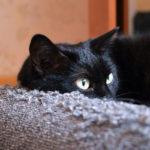 Katzen-Beobachtung beim Clickertraining