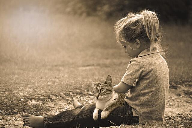 Katze wird vom jungen Mädchen gestreichelt