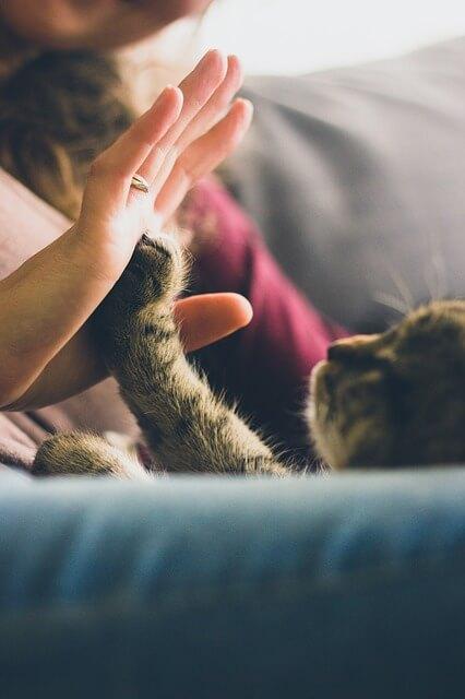 Katze gibt beim Clickertraining ein High Five