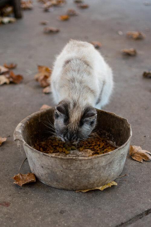 Katze isst Trockenfutter aus einem Fressnapf