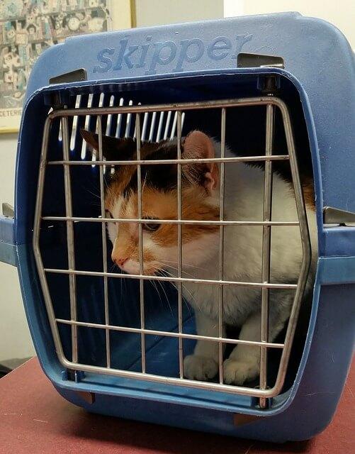 Katze sitzt in einer Transportbox