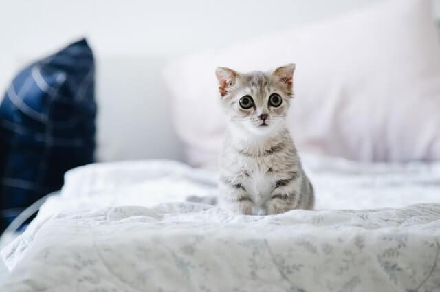 Katze sieht traurig aus