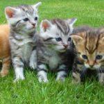 5 kleine Katzenbabys auf der grünen Wiese