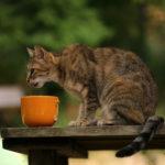 Eine Katze frisst draußen aus einer kaputten Tasse