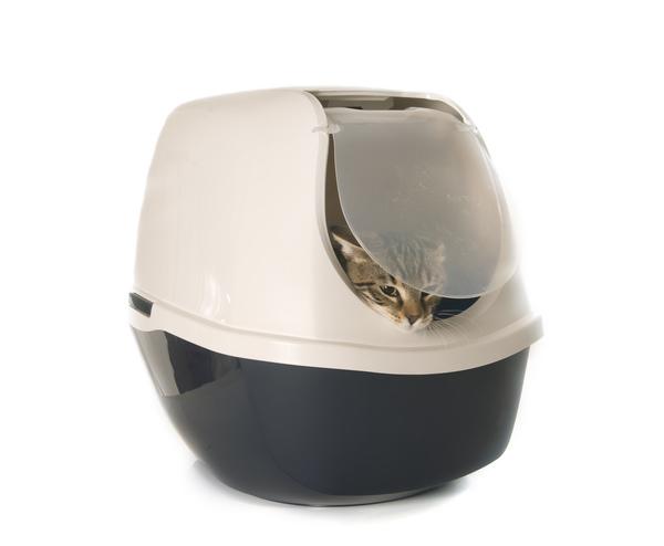 Katze schaut aus Transportbox