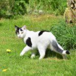 schwarz weiße Katze läuft weg