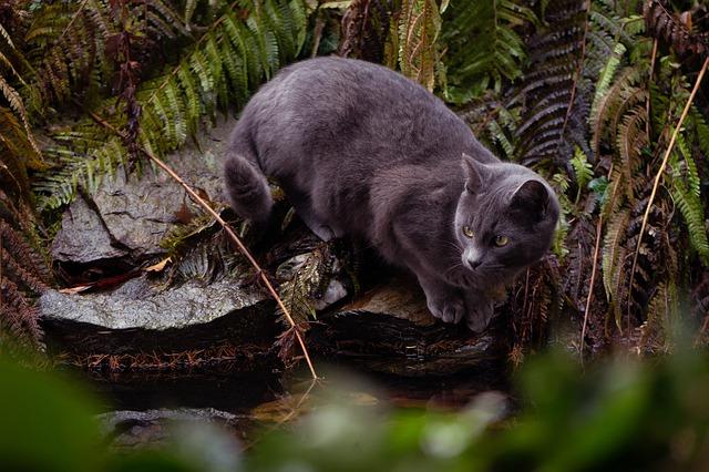 Katze in der Natur