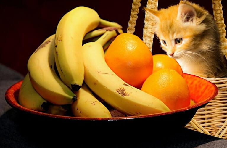 Babykatze schaut in einen Korb voller Bananen und Orangen