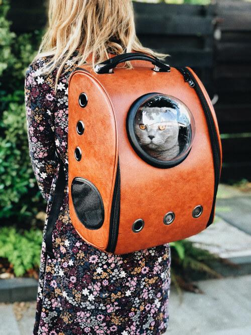 Eine Katze schaut aus dem Guckloch eines Rucksacks.