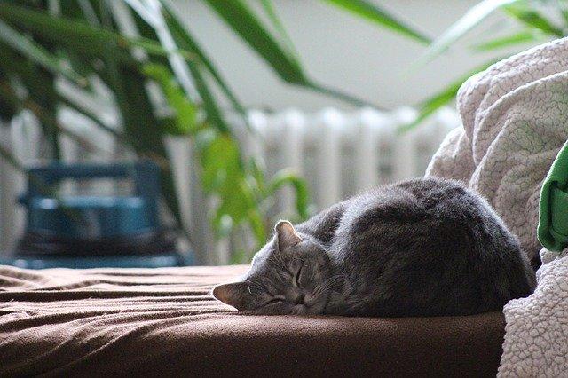 Katze schläft gemütlich auf dem Sofa