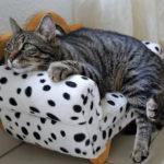 Eine Katze macht es sich auf einem Miniatur-Sessel bequem