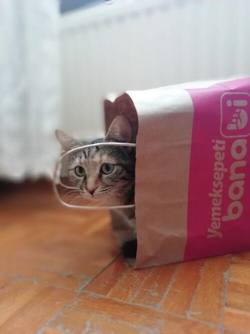 Eine kleine Katze versteckt sich in einer Einkaufstüte