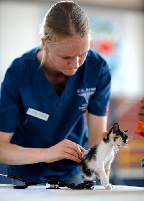 Eine Tierärztin horcht eine Babykatze ab