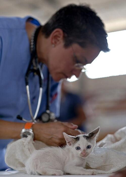 Eine Tierärztin untersucht mehrere Babykatzen