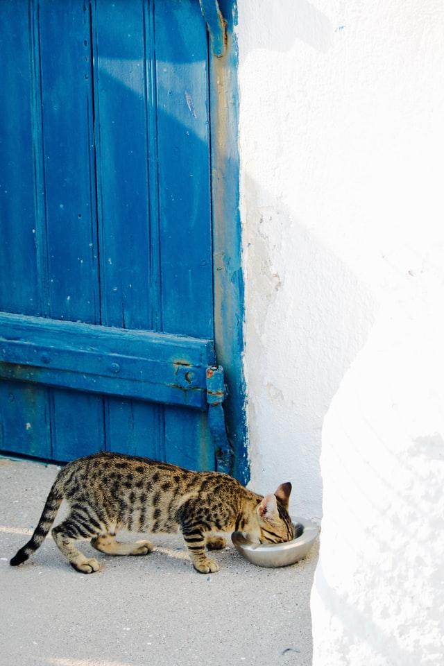 Babykatze frisst aus Napf