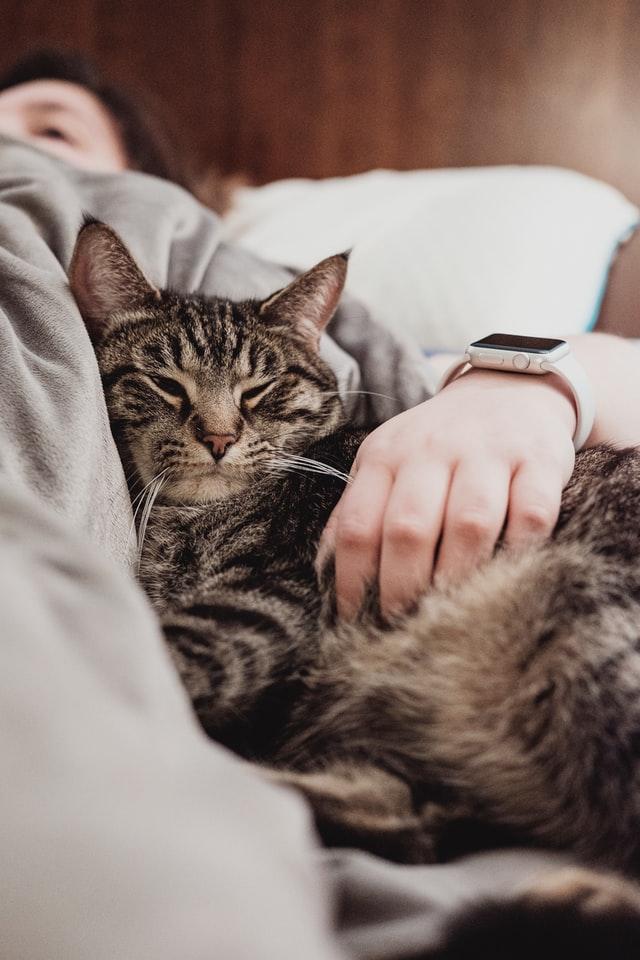 Katze kuschelt im Bett