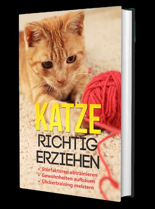 Buchcover Katze richtig erziehen