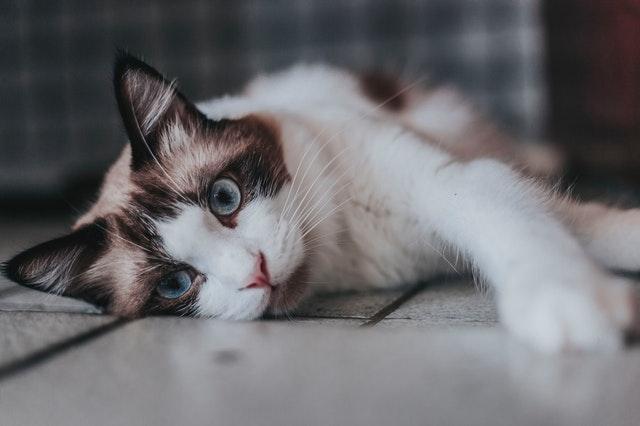 Kleine schwarz-weiße Katze