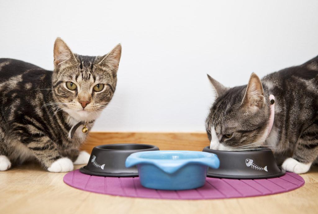 Zwei Katzen fressen aus einem Napf