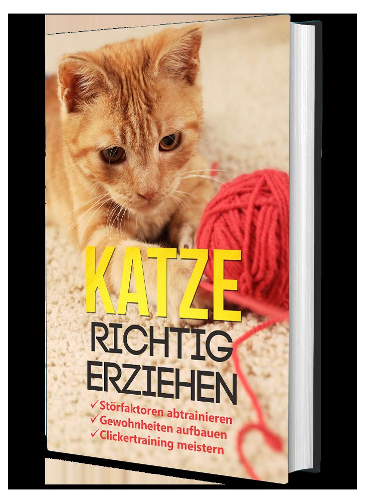 https://www.meine-erste-katze.de/wp-content/uploads/2020/07/katze-richtig-erziehen-3d-1.png